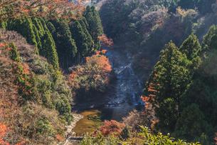 秋の養老渓谷の粟又の滝の風景の写真素材 [FYI01267371]