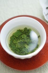 新茶の開いた葉の写真素材 [FYI01267376]