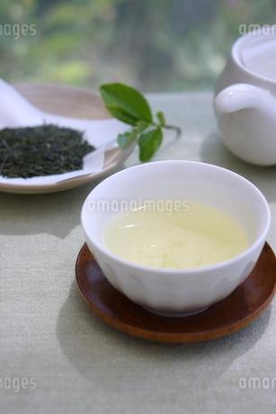 新茶の写真素材 [FYI01267377]