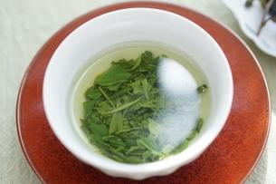新茶の開いた葉の写真素材 [FYI01267379]