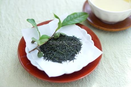 新茶の写真素材 [FYI01267380]