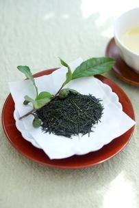 新茶の写真素材 [FYI01267381]