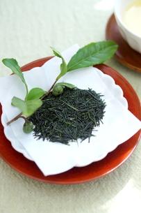新茶の写真素材 [FYI01267382]
