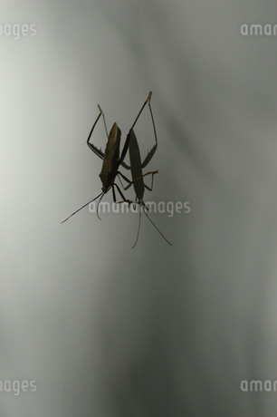 鏡面に反射する虫の写真素材 [FYI01267411]