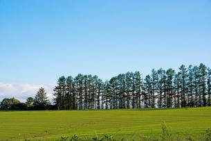 緑のムギ畑と青空 美瑛町の写真素材 [FYI01267746]