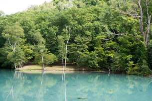 ミルク色の湖 富良野市の写真素材 [FYI01267748]