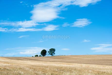 刈り取りが終わった麦畑と青空 美瑛町の写真素材 [FYI01267749]