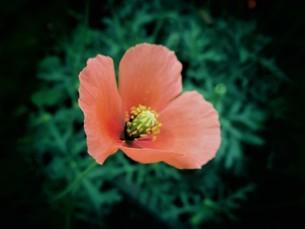初夏に咲く花の写真素材 [FYI01267803]