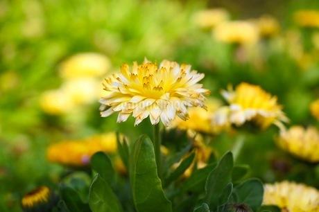 元気溢れる花の写真素材 [FYI01267820]