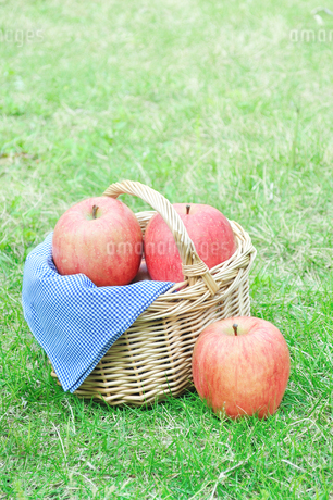 芝生の上のバスケットに入ったリンゴの写真素材 [FYI01267867]