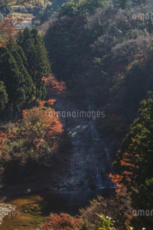 秋の養老渓谷の粟又の滝の風景の写真素材 [FYI01268152]