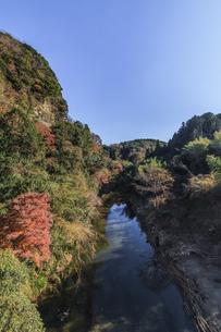秋の養老渓谷の宝衛橋からみた風景の写真素材 [FYI01268164]