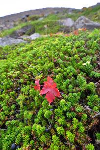 秋の那須連山の写真素材 [FYI01268339]