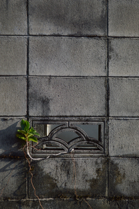 沖縄の花ブロックと隙間から生える植物の写真素材 [FYI01268429]