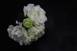 トルコキキョウの花束の写真素材 [FYI01268520]