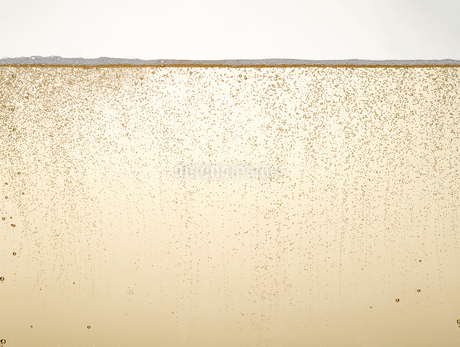 シャンパンの泡の写真素材 [FYI01268570]