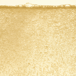 シャンパンの泡の写真素材 [FYI01268629]