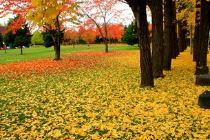 札幌中島公園の秋の風景の写真素材 [FYI01268694]