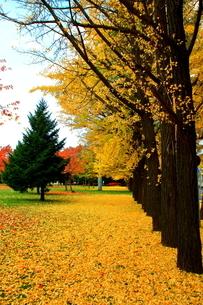 札幌中島公園の秋の風景の写真素材 [FYI01268719]