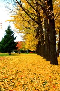 札幌中島公園の秋の風景の写真素材 [FYI01268720]