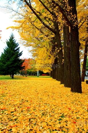 札幌中島公園の秋の風景の写真素材 [FYI01268721]