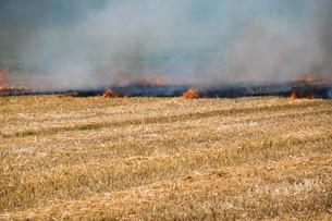 刈り取りが終わったムギ畑の火入れの写真素材 [FYI01268750]