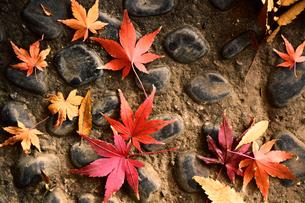 石畳に落ちた紅葉した葉のスティルライフの写真素材 [FYI01269115]