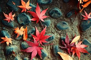 石畳に落ちた紅葉した葉のスティルライフの写真素材 [FYI01269116]