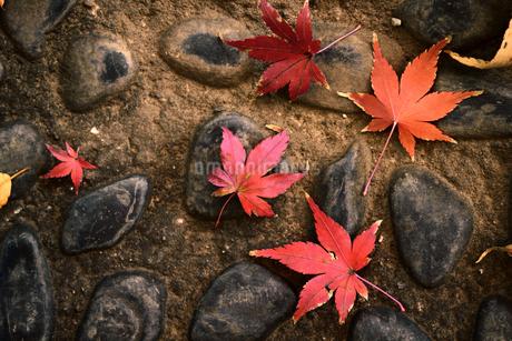 石畳に落ちた紅葉した葉のスティルライフの写真素材 [FYI01269117]