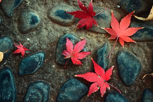 石畳に落ちた紅葉した葉のスティルライフの写真素材 [FYI01269118]