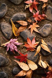 石畳に落ちた紅葉した葉のスティルライフの写真素材 [FYI01269119]