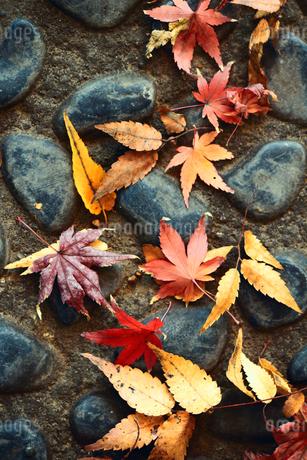 石畳に落ちた紅葉した葉のスティルライフの写真素材 [FYI01269120]