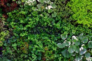 植物に覆われた壁面の写真素材 [FYI01269133]