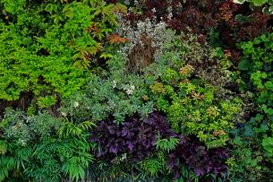 植物に覆われた壁面の写真素材 [FYI01269134]