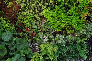 植物に覆われた壁面の写真素材 [FYI01269135]