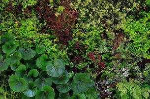 植物に覆われた壁面の写真素材 [FYI01269136]