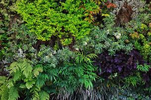 植物に覆われた壁面の写真素材 [FYI01269137]