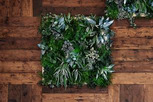壁面に飾られた様々な植物の写真素材 [FYI01269147]