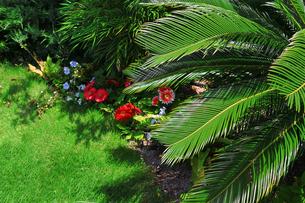 鮮やかな花が咲く緑豊かなリゾートの庭の写真素材 [FYI01269148]