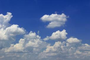晴れた夏の空に浮かぶ雲の風景の写真素材 [FYI01269153]