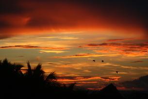 ドミニカの夜明けの写真素材 [FYI01269212]