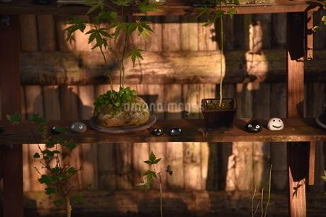 植物と置物の写真素材 [FYI01269235]