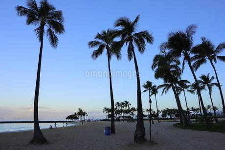 ハワイ オアフ島 ワイキキビーチのヤシの木の写真素材 [FYI01269278]