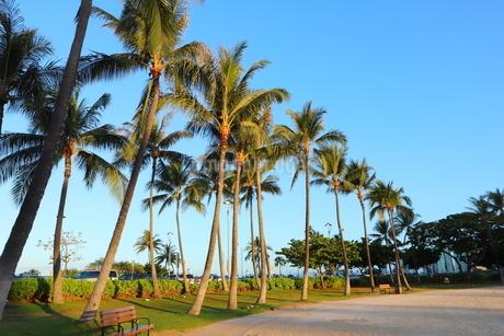 ハワイ オアフ島 ワイキキビーチのヤシの木の写真素材 [FYI01269279]