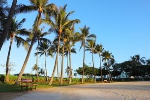 ハワイ オアフ島 ワイキキビーチのヤシの木の写真素材 [FYI01269280]