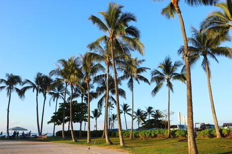 ハワイ オアフ島 ワイキキビーチのヤシの木の写真素材 [FYI01269284]