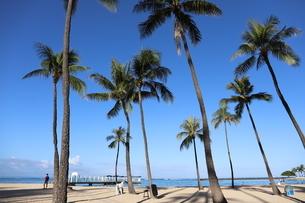 ハワイ オアフ島 ワイキキビーチのヤシの木の写真素材 [FYI01269285]