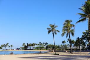 ハワイ オアフ島 ワイキキビーチのヤシの木の写真素材 [FYI01269287]