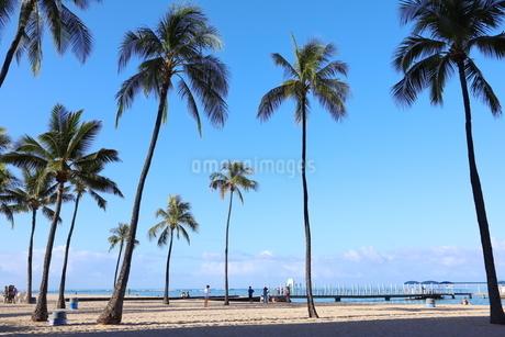 ハワイ オアフ島 ワイキキビーチのヤシの木の写真素材 [FYI01269290]