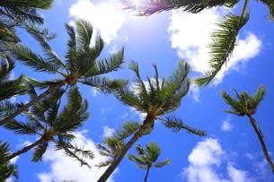ハワイ オアフ島 ワイキキビーチのヤシの木の写真素材 [FYI01269296]